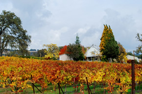 The winery in Fall
